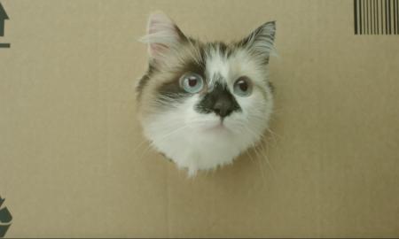 c26a14a34f8f38 Sponsored Video: Bei den günstigen Netto-Preisen lächelt sogar Grumpy Cat.  Männer ...