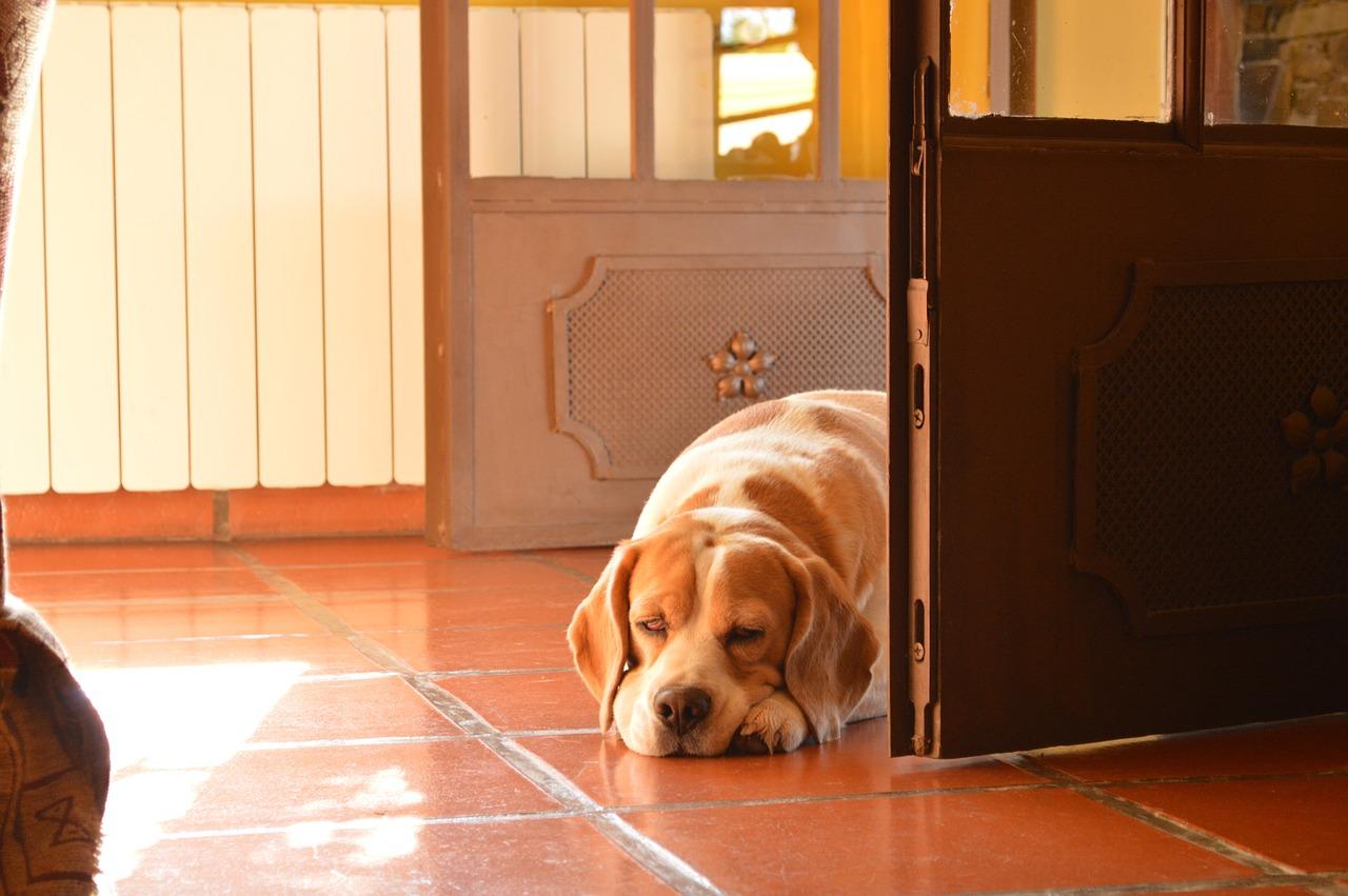 dog-190277_1280