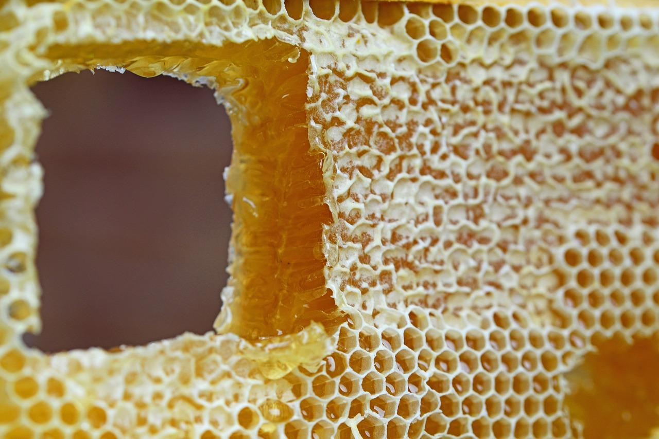 honeycomb-347558_1280